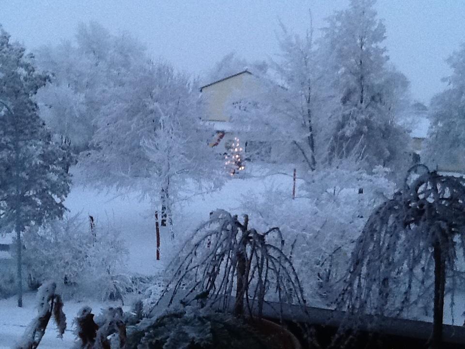 Schneelichterbaum