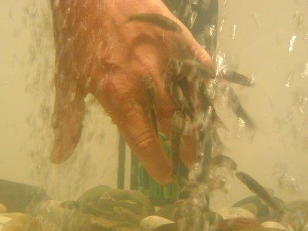 Knabberfische im Einsatz