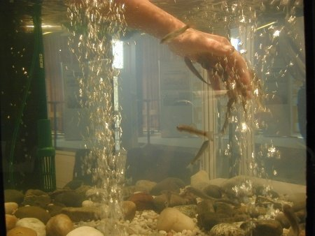 Behandlung mit Knabberfischen